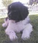 Lobo - Lobo (11 meses)