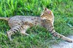 Foto Gato