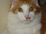 Gato - (13 años)