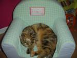 Gato - (5 años)