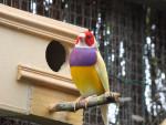 Pájaro - Macho (2 años)