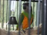 Pájaro - Macho (5 años)