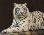 Tigre - (2 años)